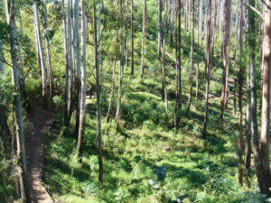 KZN MTB Trails – Giba Gorge MTB Park – Clearwater Mountain Bike Trail